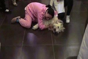 TQ: Đau đớn khóc thảm thiết vì chó đem từ Mỹ về bị hàng xóm đầu độc