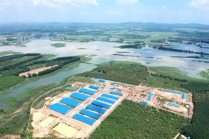 10 triệu dân suýt dùng nước phân lợn vì trang trại nuôi heo trên đầu nguồn