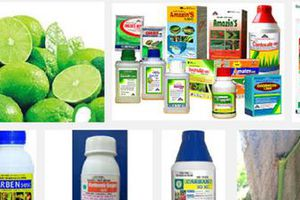 Loại bỏ một số thuốc bảo vệ thực vật: Doanh nghiệp đối mặt nhiều rủi ro?