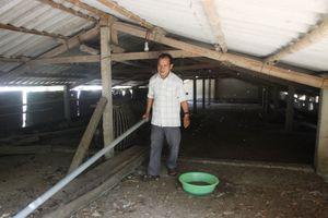 Chủ trại vịt Quảng Trị sạt nghiệp vì quyết định 'lạ' của chính quyền xã