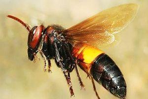 Trai làng chết bởi nọc ong, 10 người thân cũng phải nhập viện