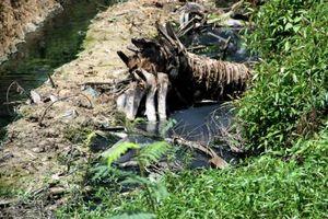 Tạm dừng hoạt động dây chuyền nhuộm của công ty Delta Galil Việt Nam