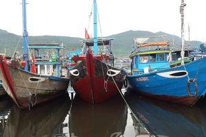 Đà Nẵng: Đẩy mạnh công tác ngăn chặn khai thác thủy sản bất hợp pháp