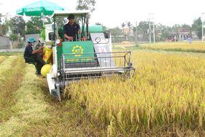 Bình Định: Năng suất lúa cao kỷ lục