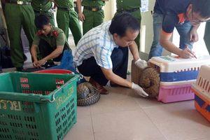 Bắt quả tang đối tượng vận chuyển 29 cá thể rùa, tê tê quý hiếm