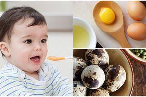 Trứng gà, trứng vịt, trứng chim cút, trứng chim bồ câu: Đâu là loại trứng tốt nhất cho bé?