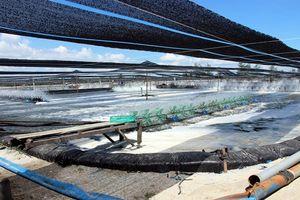 Quảng Nam: Đầu tư sản xuất giống thủy sản theo tiêu chuẩn VietGap