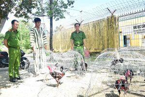 Thừa Thiên - Huế: Bắt hơn 50 đối tượng tham gia sới bạc đá gà 'khủng'