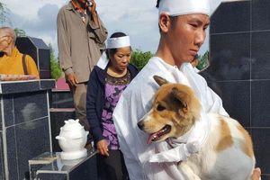 Câu chuyện uất hận về chú chó đang để tang bà chủ thì bị 'cẩu tặc' bắt mất