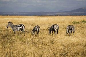 Tanzania nỗ lực gây dựng lại cảnh quan hoang dã