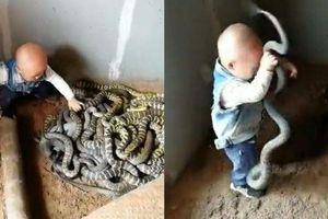 Kinh hãi cảnh bé trai mới biết đi tay không bắt cả đàn rắn