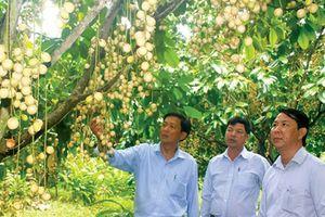 Cần Thơ bảo vệ, phát triển cây ăn trái