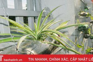 Những bầu cây 'bắt mắt' trên tường rào của học sinh Hà Tĩnh
