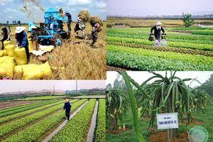 Quốc hội bàn giải pháp tái cơ cấu nông nghiệp, tránh 'được mùa mất giá'