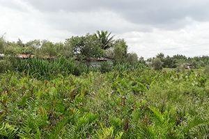 Ai tiếp tay để một DN dễ dàng 'ẵm' 156ha đất công tại Nông trường Dừa?