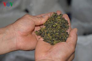 Tỷ phú trồng chè xuất khẩu nơi vùng cao Phỏng Lái