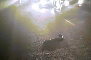 Thấy rắn hổ mang cực độc bò qua đường, người đàn ông hành động bất ngờ