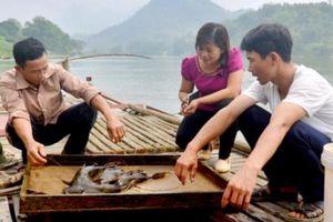 Nuôi loài cá thịt vàng ươm, không xương răm, bán 1 con lãi cả triệu
