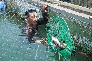Đề nghị hỗ trợ 9,2 tỷ đồng chuyển đổi nghề nghiệp cho người nuôi cá bớp bị chết