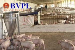Đối phó với bệnh Dịch tả lợn Châu Phi, phòng là chính