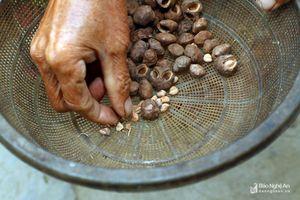 Dùng dao, búa cạy hạt rừng làm món ngon ở vùng cao xứ Nghệ