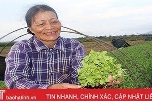 Trồng rau ven đô Hà Tĩnh