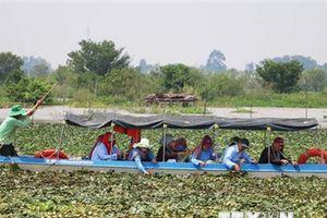 Du lịch nông nghiệp Đồng bằng sông Cửu Long - tiềm năng bỏ ngỏ