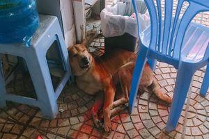 May mắn thoát khỏi tay cẩu tặc, chú chó được đội bảo vệ cưu mang cung phụng tối nào cũng cho đi tuần cùng