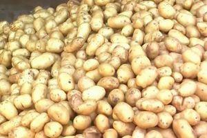 Khoai tây chế biến và bài toán nguồn nguyên liêụBài 1: Nguyên liệu khoai tây lệ thuộc nhập khẩu
