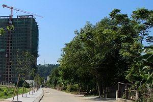 Xử phạt doanh nghiệp bất động sản ở Nghệ An