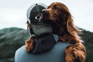 Chú chó nổi tiếng nhờ những bức hình check-in cùng chủ tại rừng Na Uy
