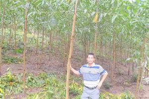 Người sở hữu hơn 200ha rừng trồng ở Phú Yên, thu hơn 2 tỷ đồng/năm