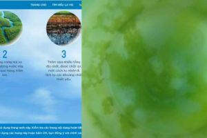 Vụ nước Lavie mọc rêu, kiến chết bất thường: Luật sư phân tích dấu hiệu vi phạm pháp luật của công ty TNHH Lavie
