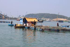 Quảng Ngãi: Cá bớp nuôi lồng chết hàng loạt, đề nghị hỗ trợ 9,2 tỷ đồng cho các hộ dân chuyển đổi nghề nghiệp