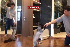 Trấn Thành huấn luyện mèo cưng 3.000 USD siêu đỉnh như xiếc thú chuyên nghiệp