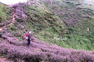 Có cả một vùng đồi hoa đẹp ngẩn ngơ như 'Mông Cổ thu nhỏ' ngay tại Tà Chì Nhù (Yên Bái)