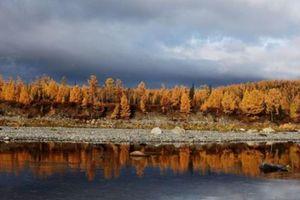 Bộ ảnh đẹp về Mùa thu vàng nước Nga