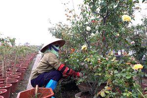 Phát triển 'vựa' rau và hoa ở Mê Linh