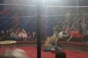 Sư tử xé toạc hàng rào sân khấu, lao ra vồ em bé 4 tuổi