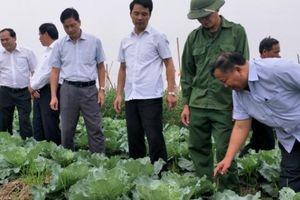 Ninh Bình: Nông dân thu lợi kép nhờ làm nông sản an toàn