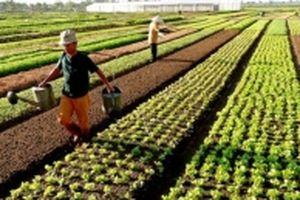 Còn rào cản trong phát triển thị trường đất nông nghiệp Việt Nam