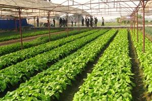 Doanh nghiệp 'ngại' đầu tư vào nông nghiệp vì đất đai manh mún