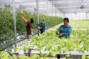 Hà Nội dẫn đầu về tái cơ cấu nông nghiệp