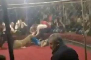Hãi hùng cảnh tượng sư tử xé rào, tấn công bé gái 4 tuổi đang xem xiếc
