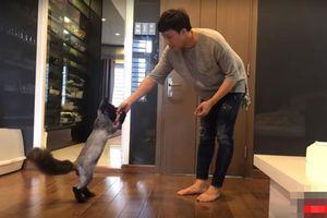 Clip: Hari Won quay phim, Trấn Thành huấn luyện mèo cưng diễn xiếc thú