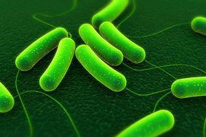 Clip: Điều gì sẽ xảy ra nếu mọi loại vi khuẩn trên Trái Đất biến mất?