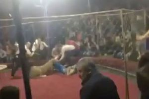 Clip: Kinh hãi cảnh bé gái 4 tuổi bị sư tử vồ trong rạp xiếc ở Nga