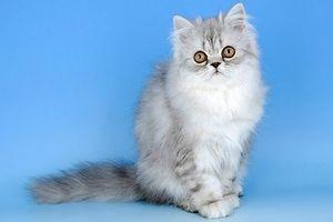 Top 10 loài động vật dễ thương nhất quả đất