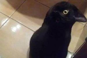 Con mèo đen 'lừa' cả thế giới bằng khả năng ngụy trang ngoạn mục, đến cả Google cũng hoa mắt