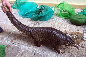 Quảng Nam: Triệt phá thành công đường dây mua bán động vật hoang dã liên tỉnh